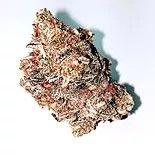 AAAA In-House Organic Slurricane-SOLD OUT Flower Hybrid